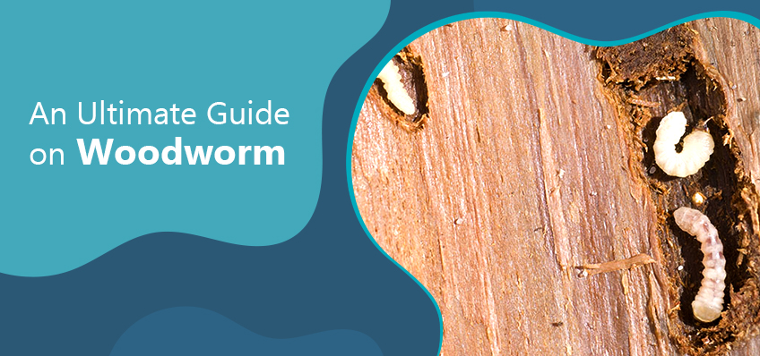 An Ultimate Guide on Woodworm